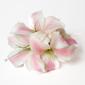 Orquidea Blanca Rosa